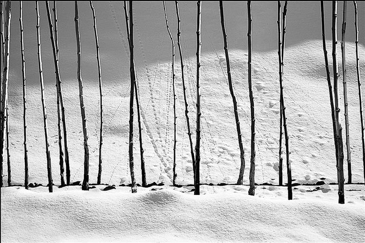 Snow White - Аббас Кіаростамі