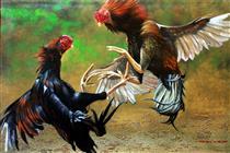 Sabung Ayam - Mas'ud Dalhar