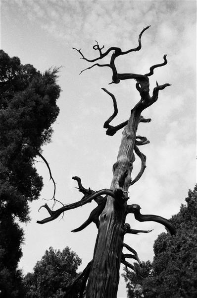 tree, 2019 - Chaokun Wang