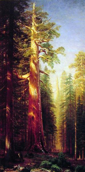 The Great Trees, Mariposa Grove, California, 1876 - Albert Bierstadt