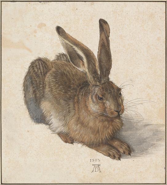 Hare, 1528 - Albrecht Durer
