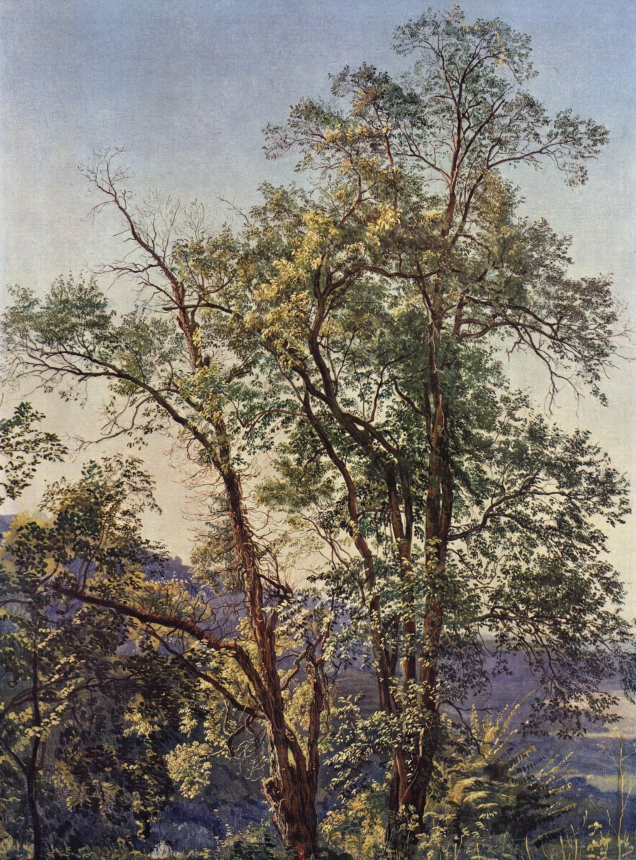 Olive trees, 1825