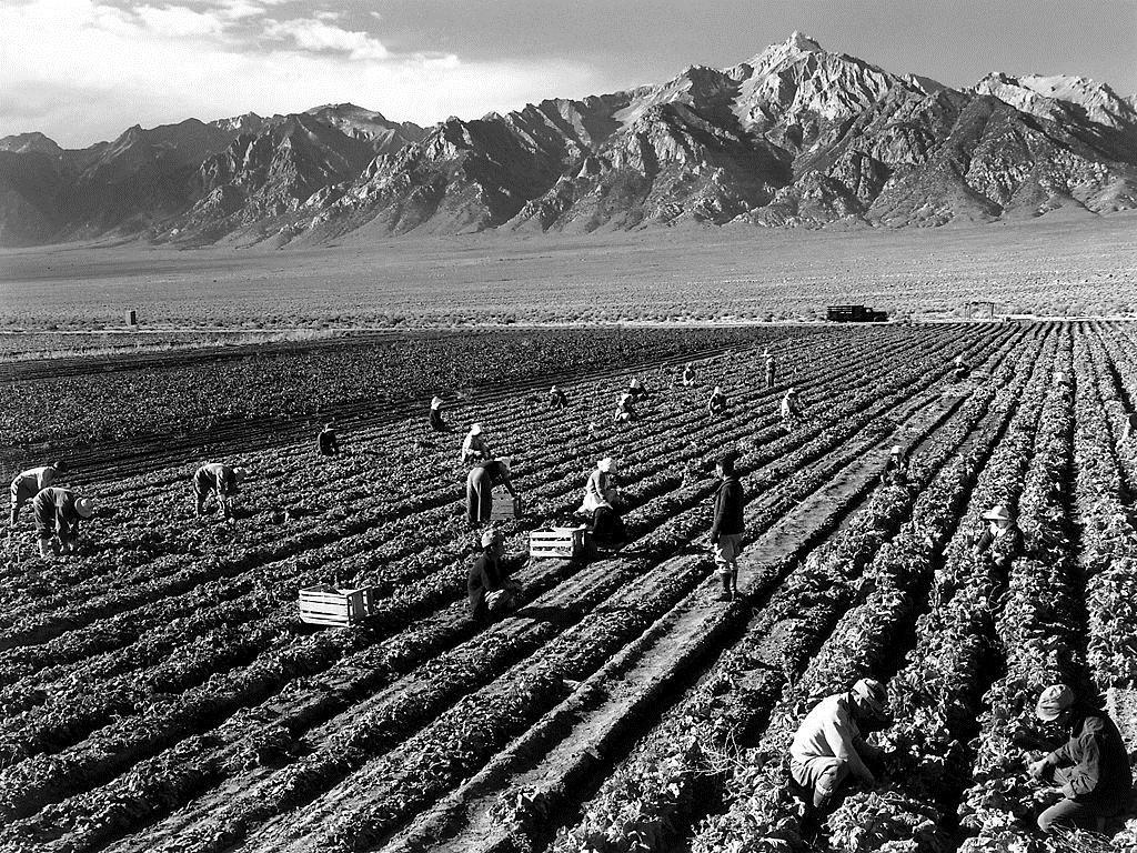 Farm, farm workers, Mt. Williamson in background, Manzanar Relocation Center, California, 1943