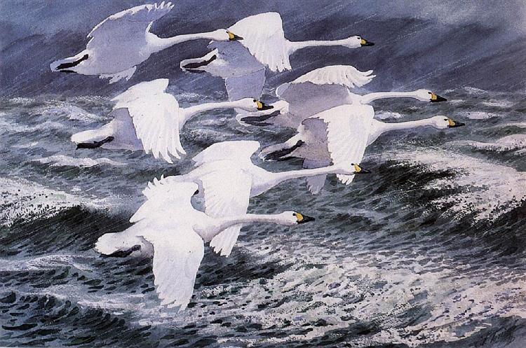 Berwick Swans - Charles Tunnicliffe - WikiArt.org