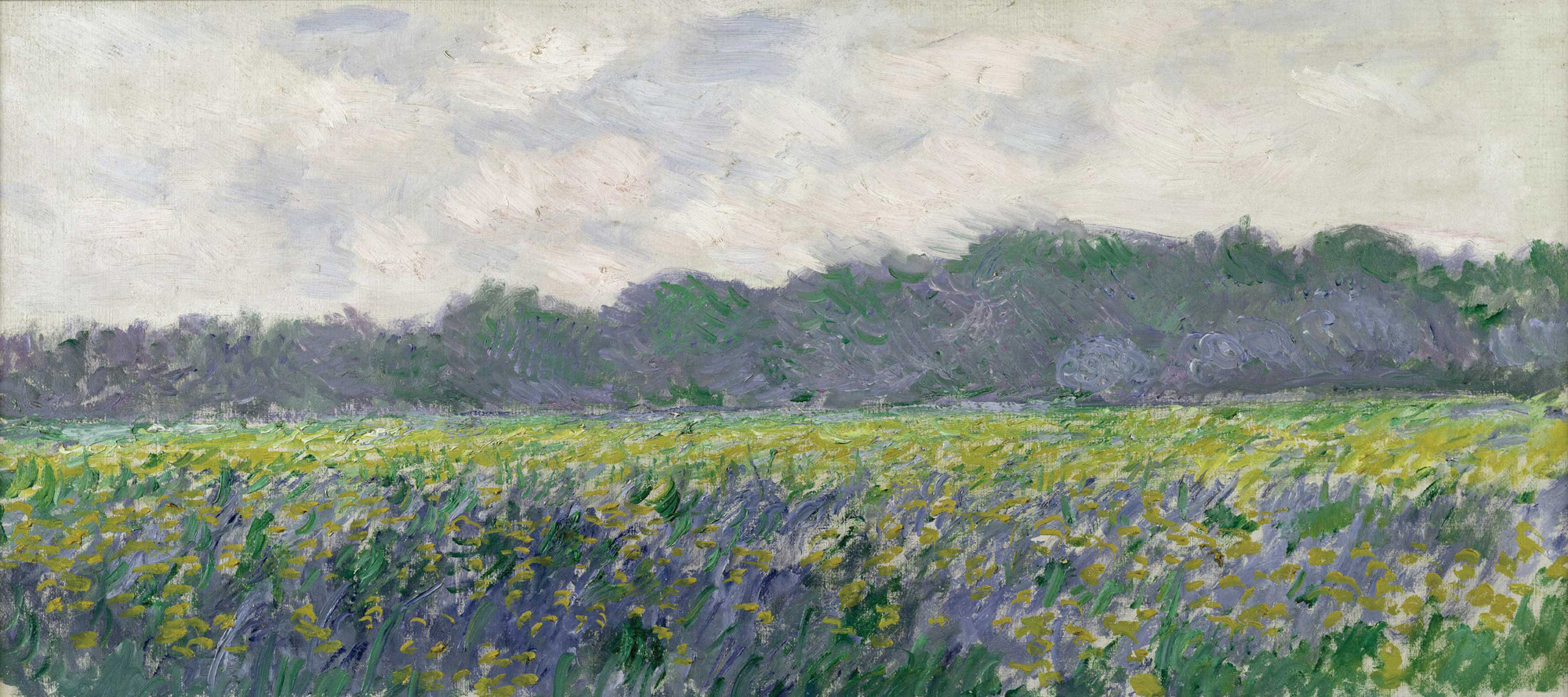Monet Landscape Field Field of Yellow Irises...