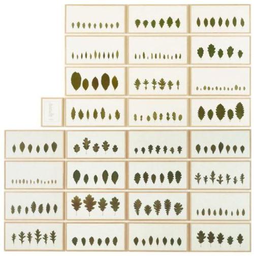 Quercus, 1992 - Herman de Vries