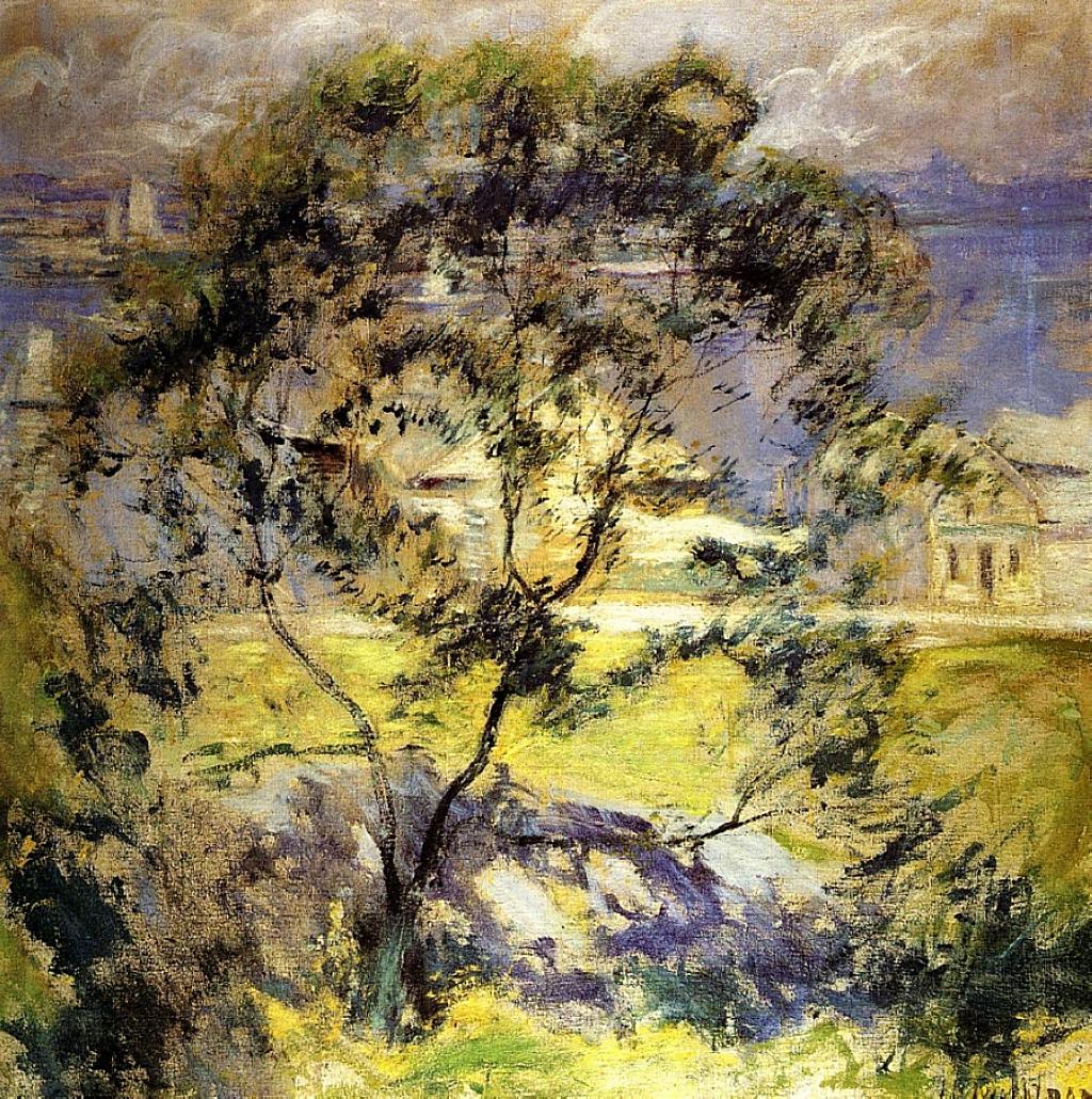 Wild Cherry Tree, 1901
