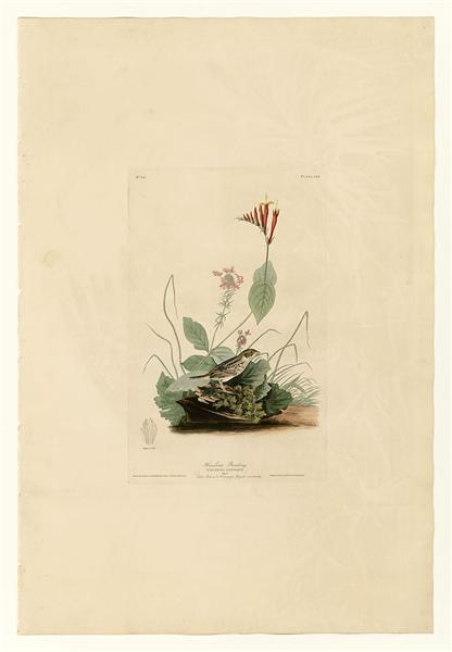 Plate 70 Henslow's Bunting - John James Audubon