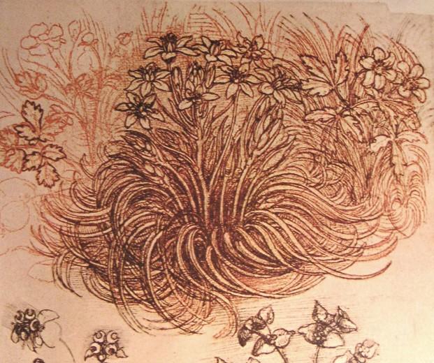 Drawing of a botanical study, c.1500 - Leonardo da Vinci