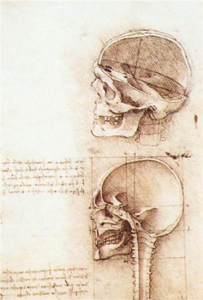 Studies of human skull, 1489 - Leonardo da Vinci
