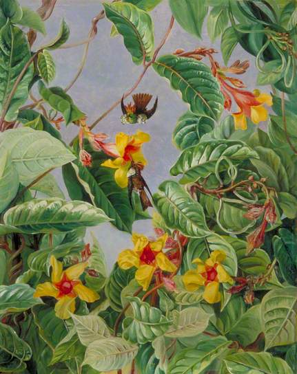 A Brazilian Climbing Shrub and Humming Birds, 1873 - Marianne North