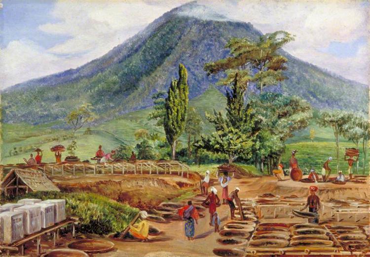 Tea-Drying in Mr Hölle's Establishment, Java, 1876 - Marianne North
