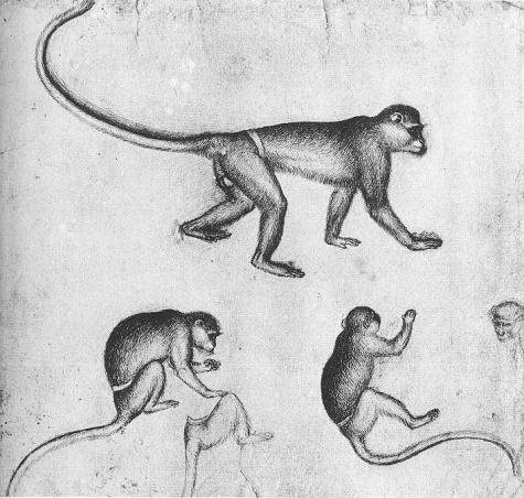 Apes, 1430 - Пизанелло
