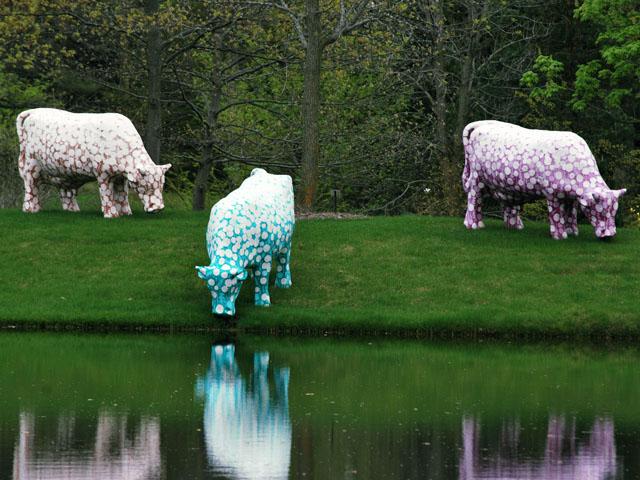 Des Vaches: Mo, Ni, Que, 1971 - 1976 - Самуэль Бури