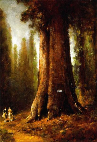 California Redwood Trees - Thomas Hill