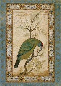 A Barbet (Himalayan blue-throated bird) - Ustad Mansur