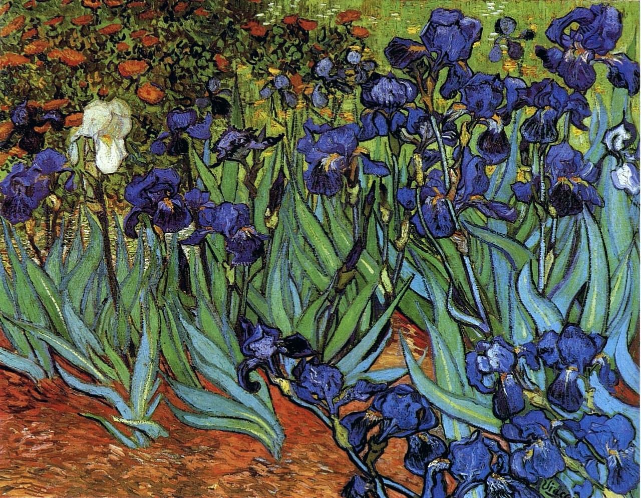 The art of spring ct esthetic for Van gogh irises